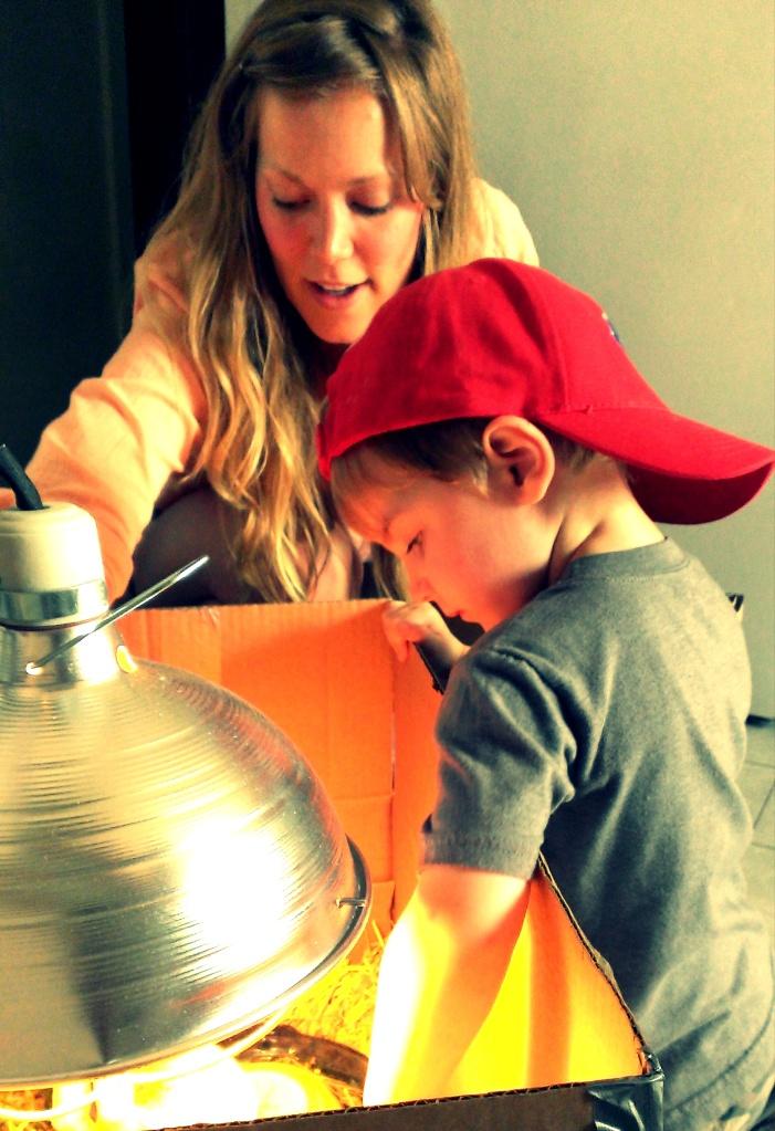 nephews, raising chickens, writing