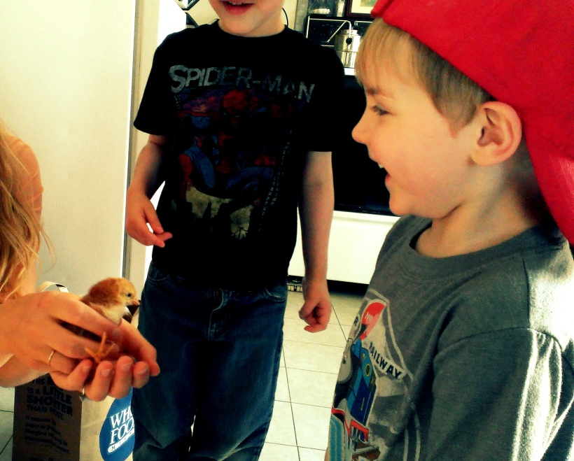 raising chickens, nephews, writer