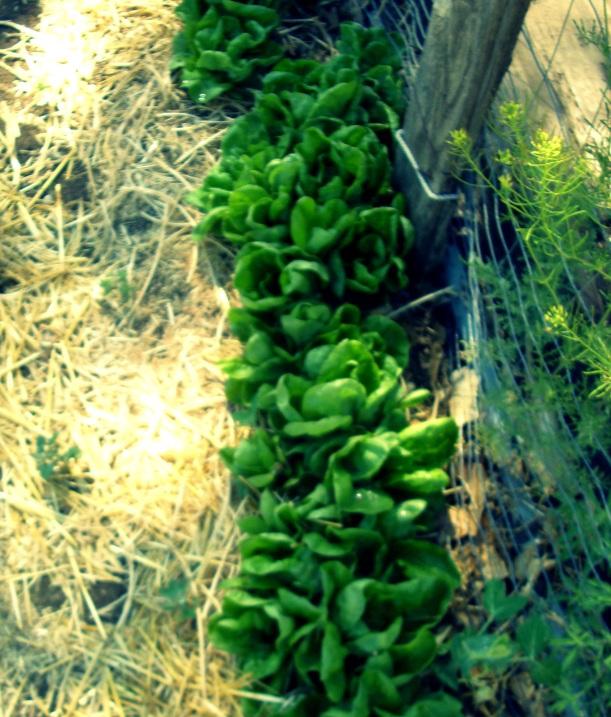 gardening, local, organic, albuquerque, market