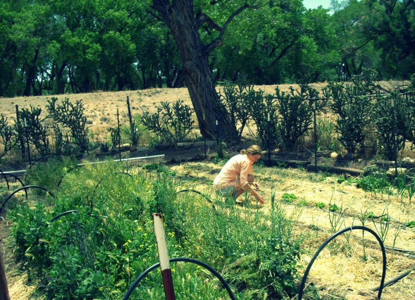 garden, albuquerque, local, organic, produce
