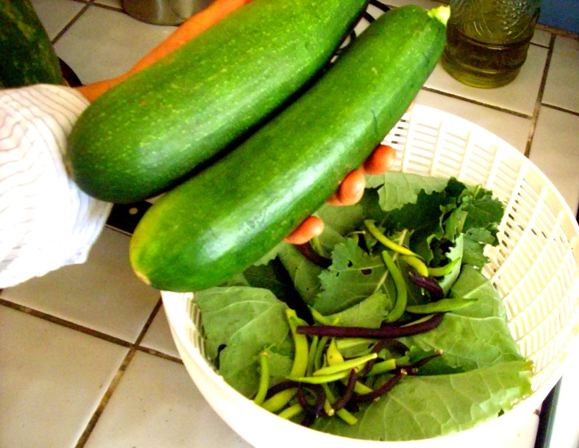 zucchini, organic, recipe, garden, stuffed zucchini