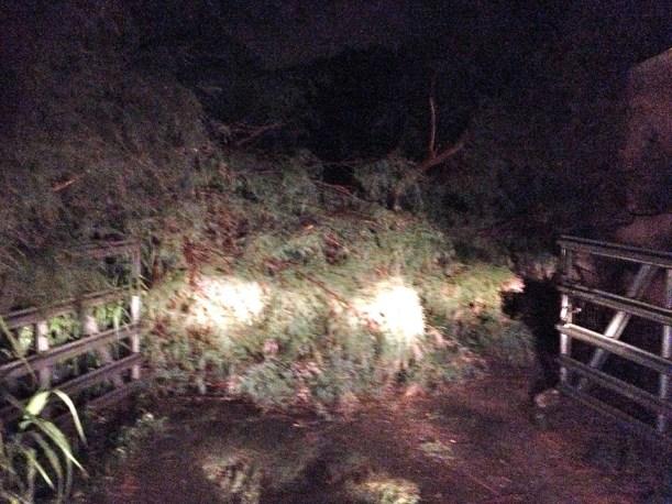 albuquerque storm, flooding, damage