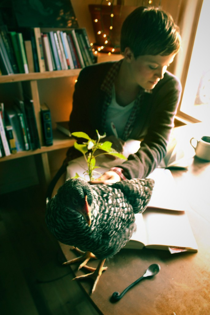 chickens, writing distractions, writing